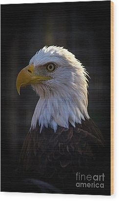 Eagle 1 Wood Print by Jim McCain