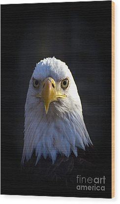 Eagle 2 Wood Print by Jim McCain