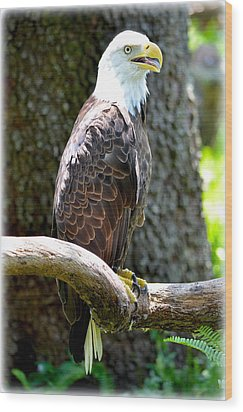 Wood Print featuring the photograph Eagle by Amanda Vouglas