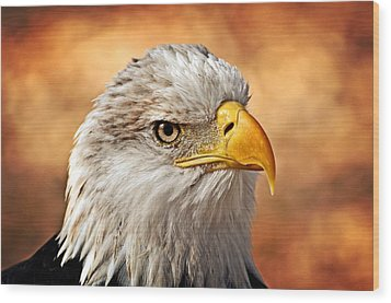 Eagle At Sunset Wood Print by Marty Koch