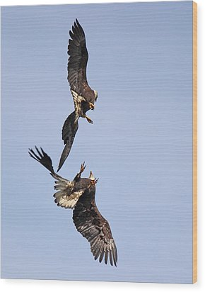 Eagle Ballet Wood Print by Randy Hall