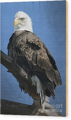 Eagle Eye Wood Print by Bob Hislop
