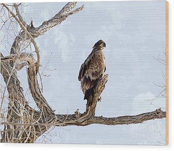 Eagle Eye Wood Print by Lori Tordsen