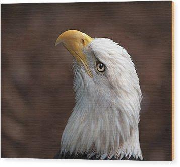 Eagle Eye Wood Print by Tammy Smith
