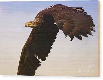 Wood Print featuring the photograph Eagle In Flight by Nick  Biemans
