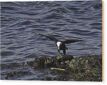 Wood Print featuring the photograph Eagle Landing. by Timothy Latta