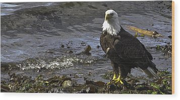 Wood Print featuring the photograph Eagle On The Beach by Timothy Latta