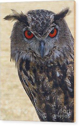 Eagle Owl Wood Print by Anthony Sacco