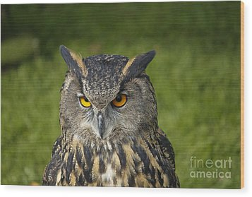 Eagle Owl Wood Print by Clare Bambers