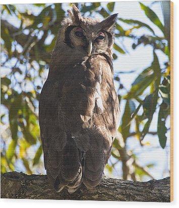 Eagle Owl Wood Print by Craig Brown