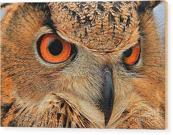 Eagle Owl Wood Print by Leslie Kirk