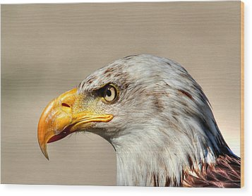 Eagle Profile Wood Print by Larry Trupp