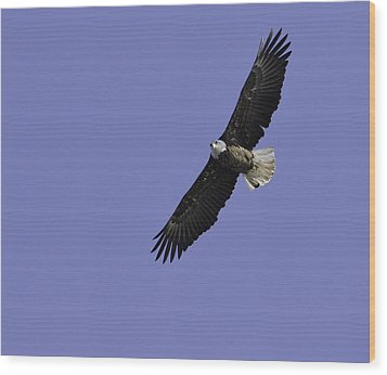 Eagle Soaring In The Sky Wood Print by Thomas Young