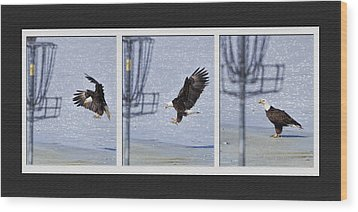 Eagle Triptych Wood Print by Rob Graham