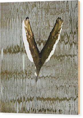 Eagle Wings Wood Print by Marcia Lee Jones