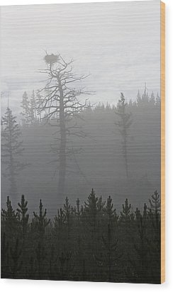 Eagle's Nest In Fog Wood Print