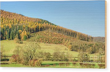 Early Autumn Wood Print by David Birchall