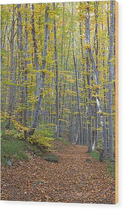 Wood Print featuring the photograph Early Autumn Vitosha Mountain Forest Bulgaria by Jivko Nakev