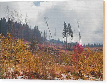 Wood Print featuring the photograph Early Autumn Yellow Red Colored Mountain View by Jivko Nakev