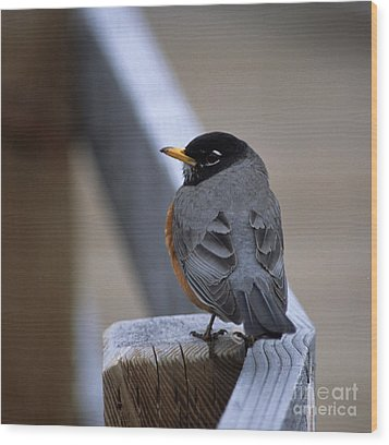 Wood Print featuring the photograph Early Bird by Sharon Elliott