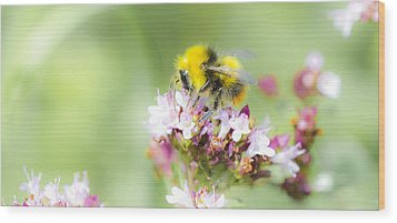 Bombus Pratorum Wood Print