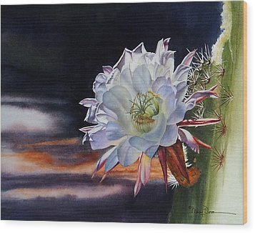 Early Morning Argentine Giant Cactus Flower Wood Print