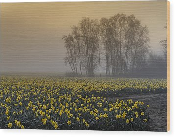 Early Morning Daffodil Fog Wood Print