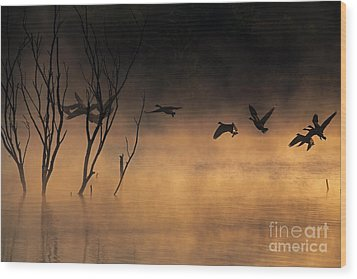 Early Morning Flight Wood Print