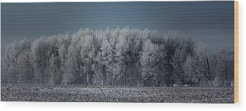 Early Morning Frost Wood Print by Sarah Boyd