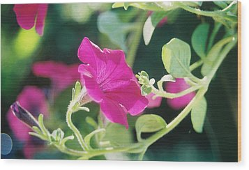 Wood Print featuring the photograph Early Morning Petunias by Alan Lakin