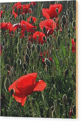 Early Morning Poppies Wood Print by Dorothy Berry-Lound