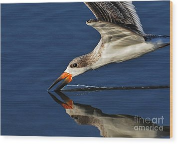 Wood Print featuring the photograph Early Morning Skimmer by Kathy Baccari