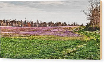 Wood Print featuring the photograph Early Spring Field by Greg Jackson