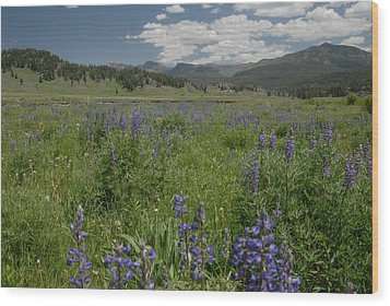 Early Spring In Yellowstone Wood Print by Larry Moloney