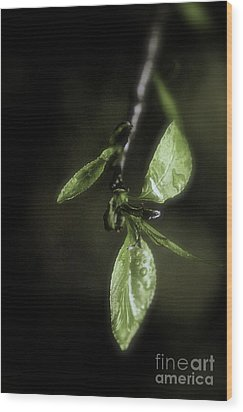 Early Spring Leaves Wood Print by Jill Smith