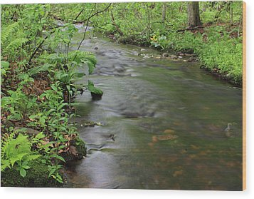 Early Summer At Borden Brook Wood Print by Andrew Pacheco