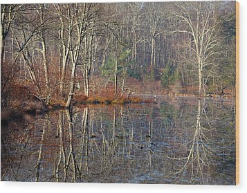 Early Winter Reflects Wood Print by Karol Livote