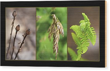 Earth Triptych Wood Print by Christina Rollo