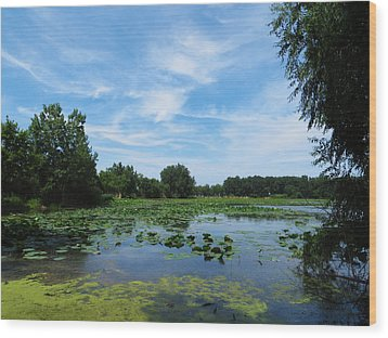 East Harbor State Park - Scenic Overlook Wood Print by Shawna Rowe