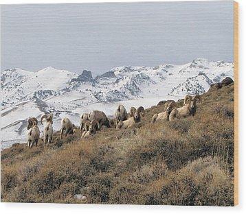 East Humboldt Rams Wood Print