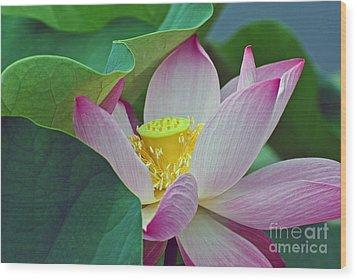 East Indian Lotus Wood Print