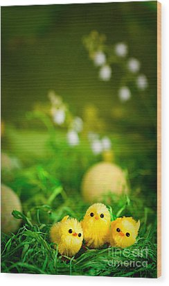 Easter Chicks Wood Print by Mythja  Photography