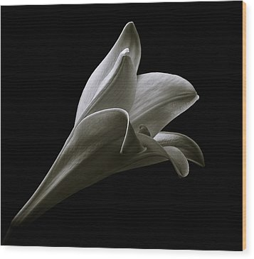 Easter Lily II Wood Print by Jeff Burton