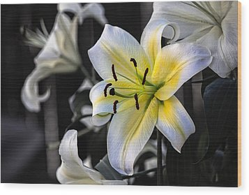 Easter Lily On Black Wood Print by Dave Garner