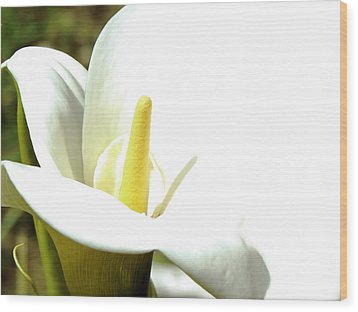 Easter Lily Wood Print by Pamela Patch