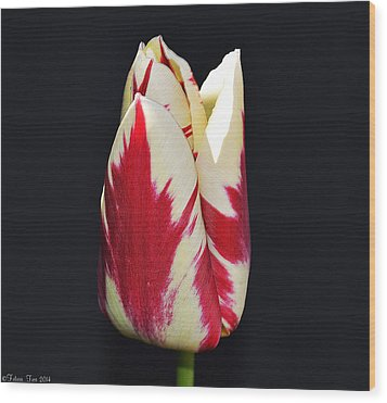 Easter Greetings - Twinkle Tulip Wood Print
