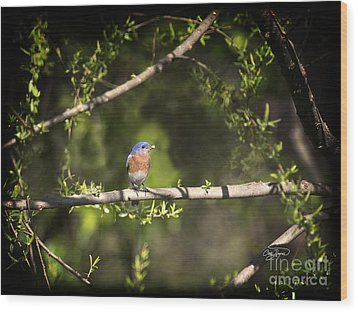 Eastern Blue Bird At Sunrise Wood Print by Cris Hayes