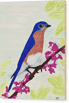 Wood Print featuring the drawing Florida - Eastern - Blue Bird by D Hackett