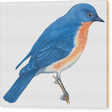 Eastern Bluebird Wood Print by Anonymous