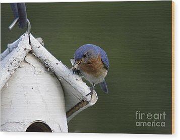 Eastern Bluebird Wood Print by Linda Freshwaters Arndt